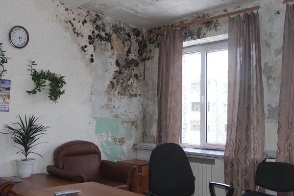 Грибок на стенах дома