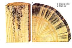 Схема поражения древесины плесенью