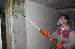 Обработка стен антигрибковым составом