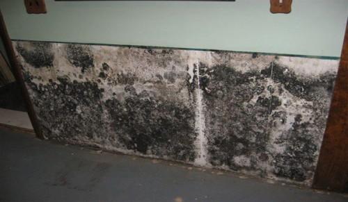 Плесень на стене в доме