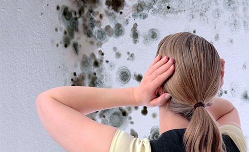 Появление плесени на стенах
