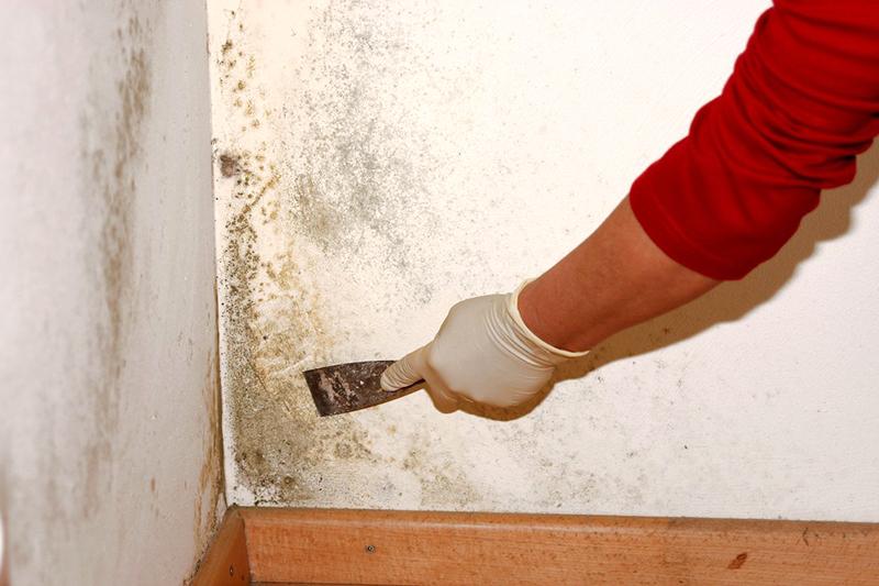 Как удалить грибок и плесень на стенах в домашних условиях