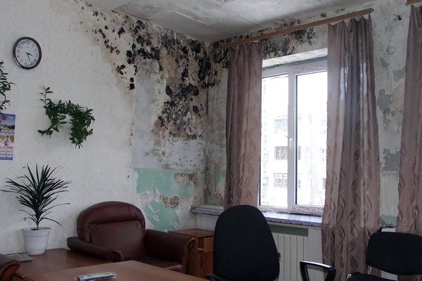 Плесень на стенах комнаты